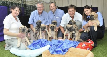 20-Year-Old Frozen Dog Sperm Produces Litter of 10 Great Dane Puppies