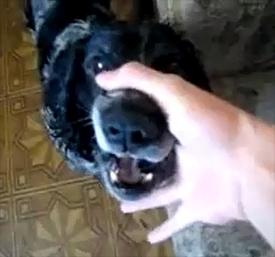 Beatbox Dog Abwabwabwa