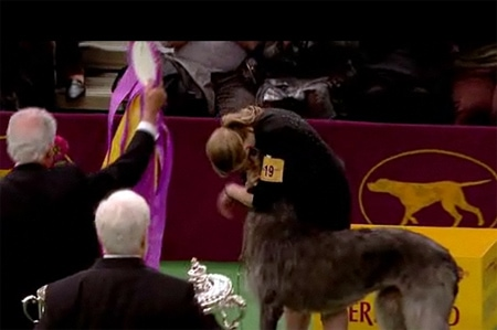 2011 Westminster Kennel Club Best in Show Winner Coverage