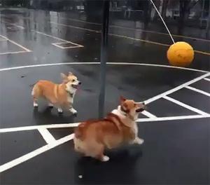 cute dog videos part 318