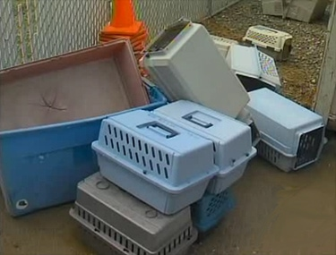 37 Rescued Dogs Seized and Gassed by Brown County Dog Warden
