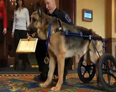 Hero Award: Major Recognition for Injured Police Dog