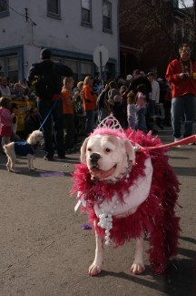 8,000 Pets on Parade in St Louis