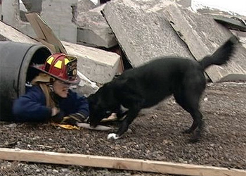 Canines Train for National Disasters