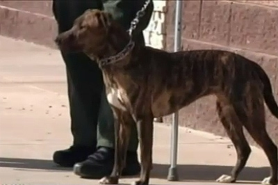 Grand Junction IRS Office Denies Service Dog Access on Camera