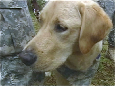 Canine Detail: Dogs Defray the Stress of Battle