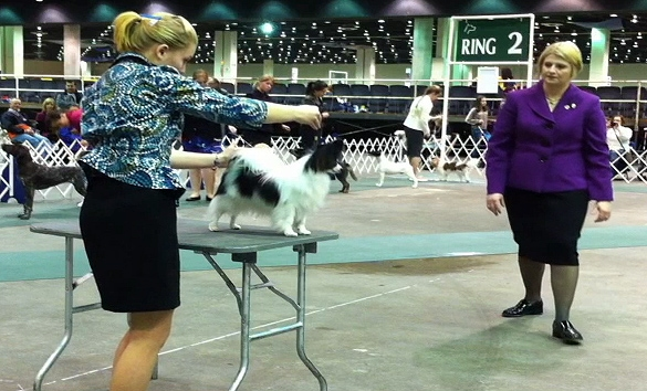 Behind the Scenes at the Detroit Kennel Club Dog Show