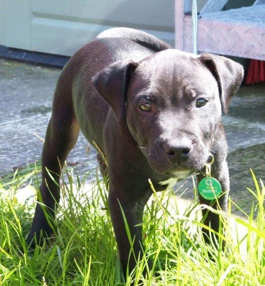 Lennox the Dog 'Humanely Put to Sleep'