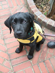 Guide Dog Foundation for the Blind: Name a Pup Challenge