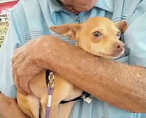 FL Rescue Group Refuses to Adopt to Senior Citizens