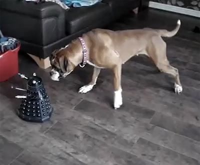 Boxer vs. Mutant Robot