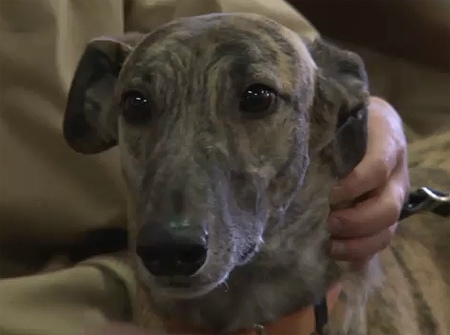 Greyhound Friends of New Jersey Inducted into 2011 Animal Hall of Fame