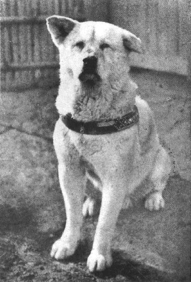 Mystery Over Fate of Hachiko Resolved