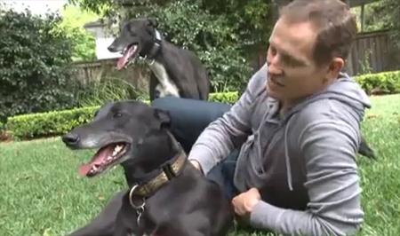 Todd McKenney on the Greyhound Adoption Experience