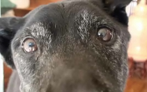 Is this the world's new oldest dog?