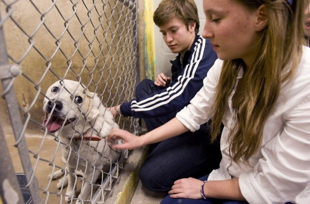 Pima County Animal Care Center Awarded Petfinder Foundation Grant