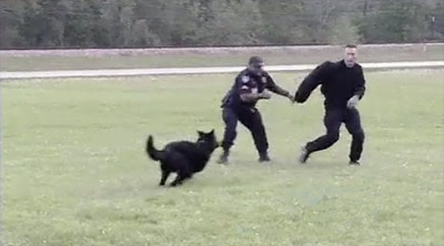 Police Dogs Strut Their Stuff in Field Trials Competition