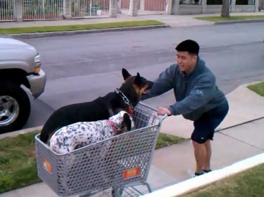 Shoppin' With My Dogs ♫