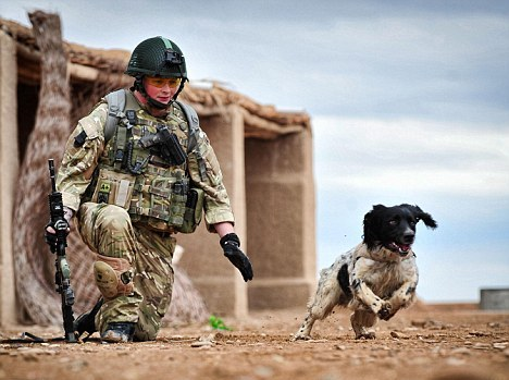 Bomb Sniffing Dog Dies Hours After His Handler is Killed, Broken Heart Suspected