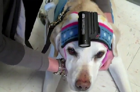 Therapy Dog-Cam