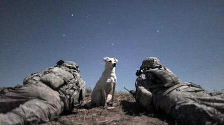 Dogs Combat Combat Outpost Dogs
