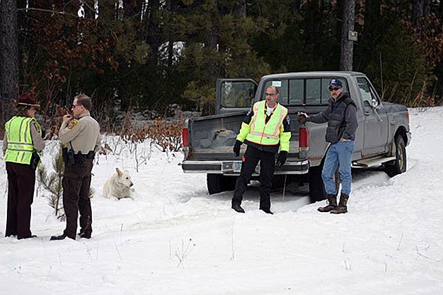 Devoted Dog Holds Vigil at Site of Owner's Death