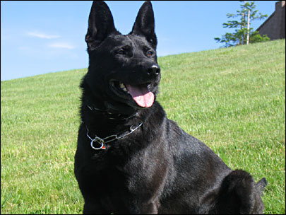 Washington Police Dog Killed While Apprehending Suspect