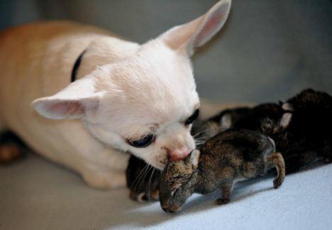 Capricorn Animal Rescue Cats