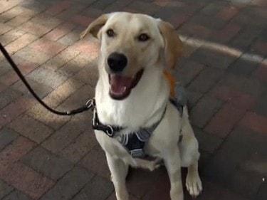 diabetes detection dog
