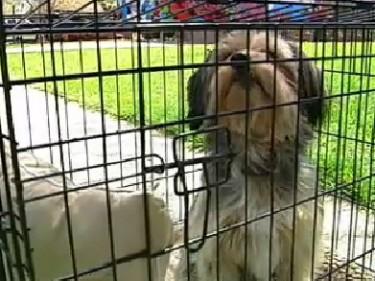dog saved by neighbor