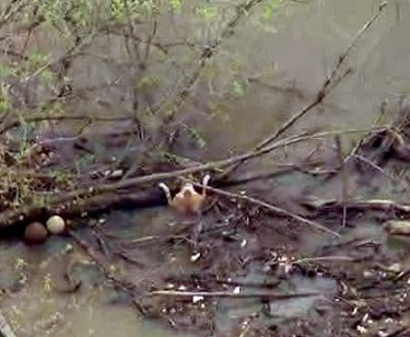 dog saved dramatic river rescue
