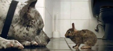 easter sweetness - dog bathes bunny