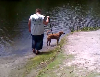 Caught on Camera: Dog Narrowly Escapes Gator Attack