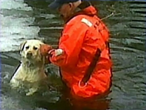 Loyal Lab Rescues Stranded Best Friend
