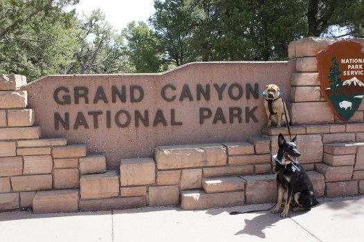 Dog Friendly Grand Canyon National Park