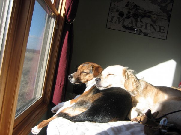 Fan Photos: Zoey and Chip Share a Sunbeam