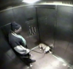 Man Arrested for Beating Pit Bull Puppy in Elevator