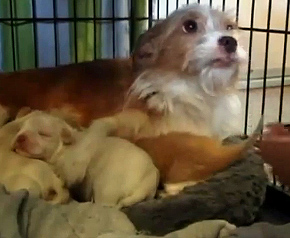 A Mother's Love: Dog Raises Mixed Litter of Puppies and Kittens