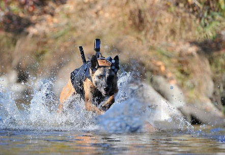 Special Forces in Bin Laden Raid Assisted by Dog