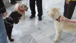 court therapy dogs
