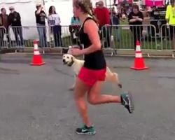 Dog Crashes Maryland Half Marathon, Crosses Finish Line in 2:14