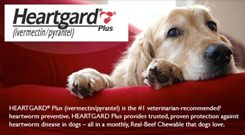 Heartgard Whistleblower Says She Was Fired For Protecting Dogs