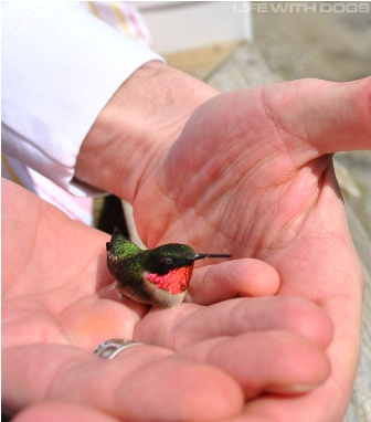 The Saturday Pet Blogger Hop/A Bird in the Hand