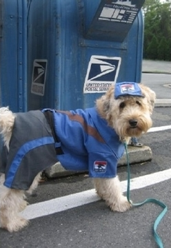 Postal Service Announces Top Dog Attack Cities