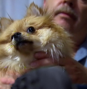 Dog Survives Hawk Attack, Racks Up $6000 Vet Bill