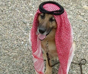 US Professor Banned From Saudi Campus Over Picture of Dog in Head Dress