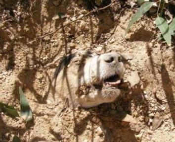 Dog Shot and Buried Alive Makes Miraculous Recovery