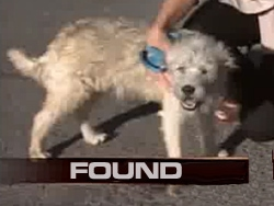 Teddy's Great Adventure: Lost Dog Found 1100 Miles from Home