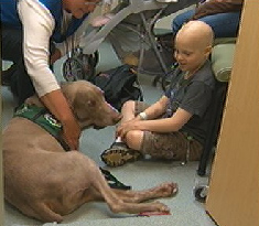 Three Legged Therapy Angel Helps Kids Battle Cancer
