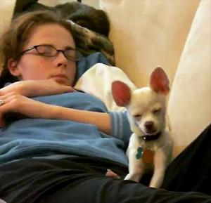 Three Sleepy Puppies
